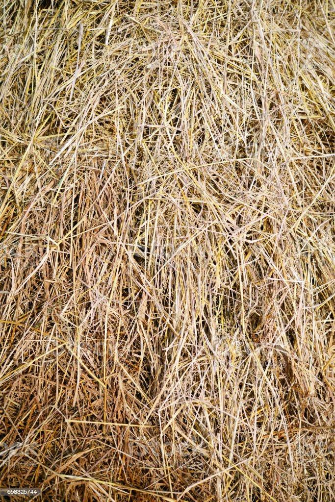 Rice straw background stock photo