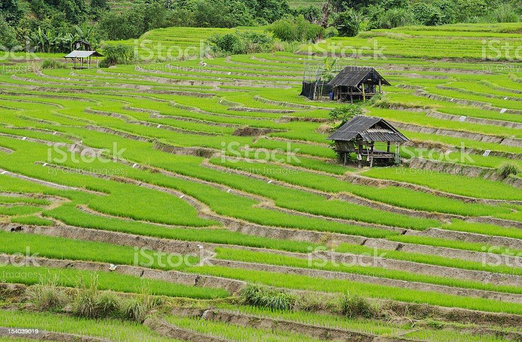 Rice Terrace At Chiang Mai Thailand royalty-free stock photo