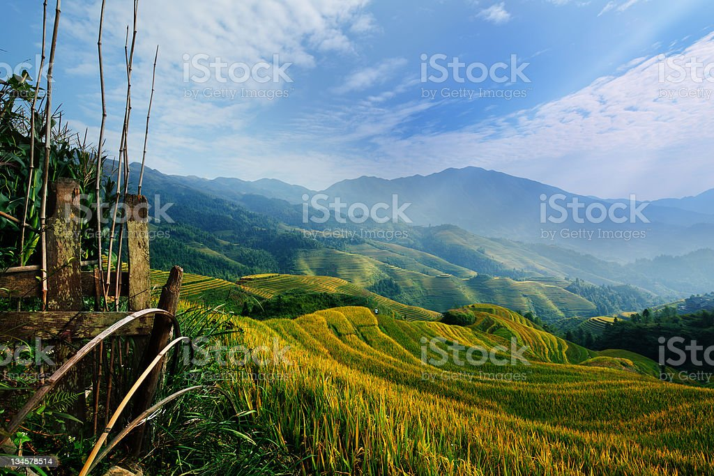 Rice terrace in Guangxi China royalty-free stock photo