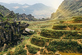 Rice terraces and hills in Sapa, Vietnam.