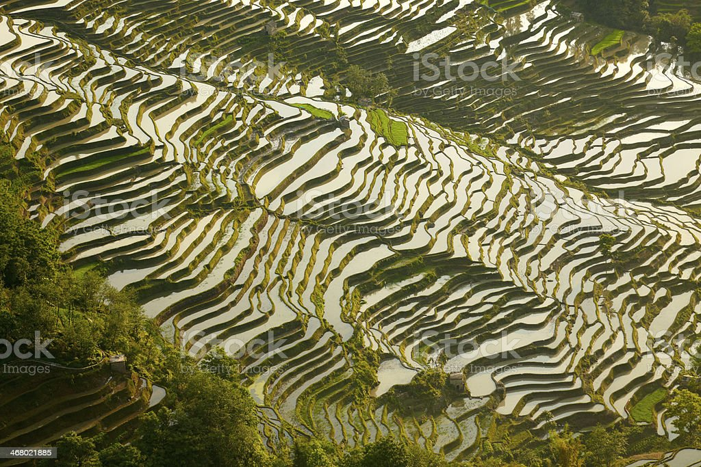 Rice terraces background stock photo