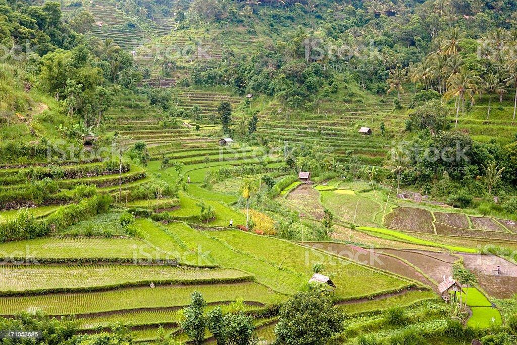 Rice Terraces Bali Indonesia royalty-free stock photo