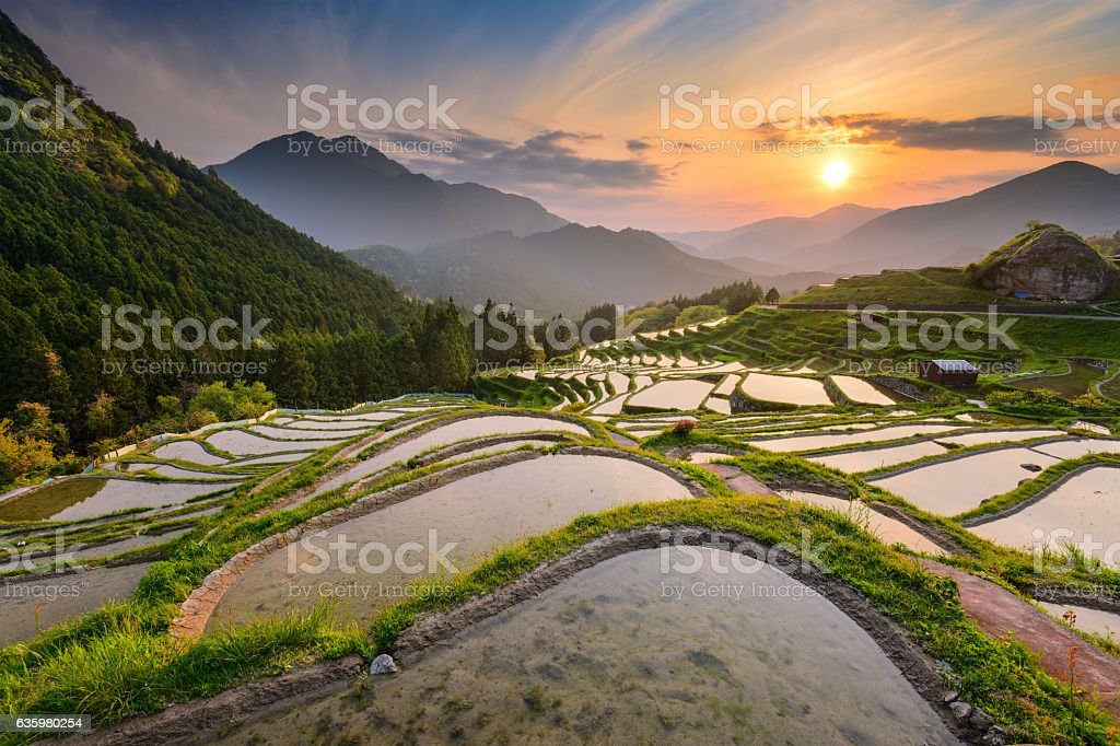 Rice Terraces in Japan stock photo