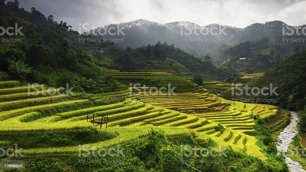 Rice Terraces in Mu Cang Chai, near Sapa town, Vietnam royalty-free stock photo