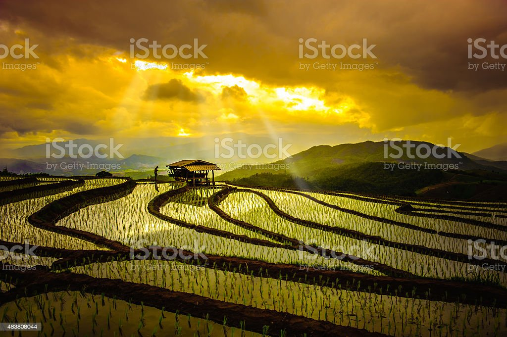 Rice Terraces in thailand stock photo
