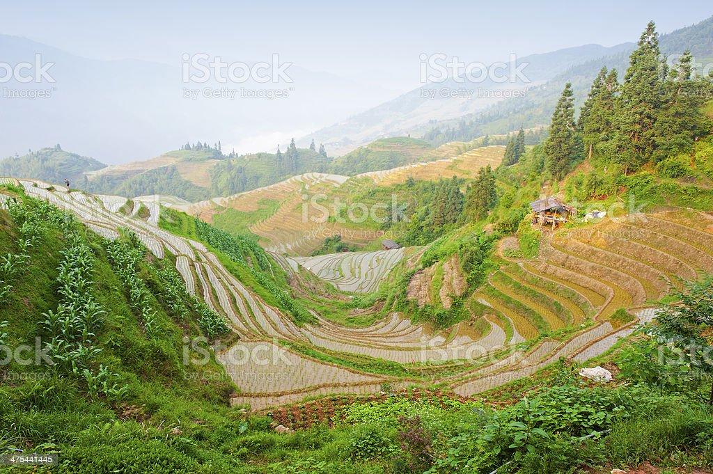 Rice terraces of China stock photo