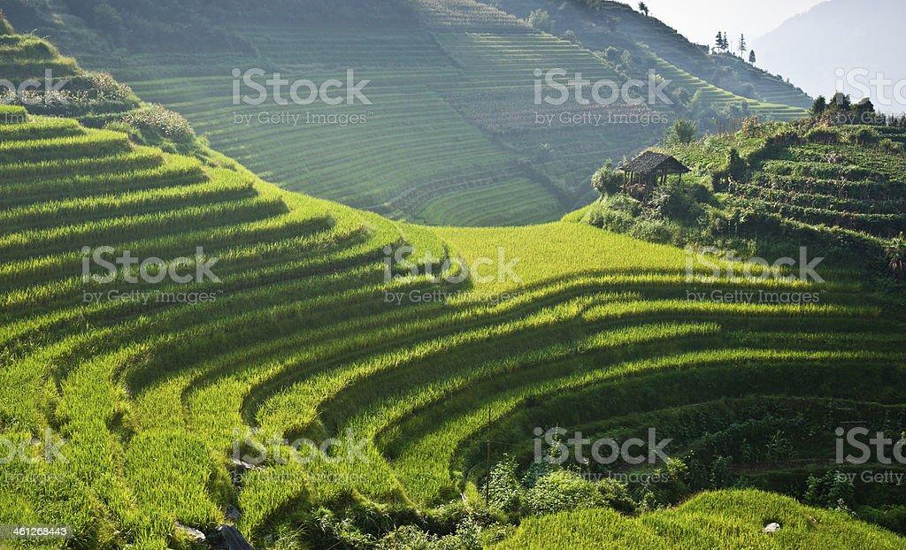 Rice Terraces of Longji Titian near Ping'an in China stock photo