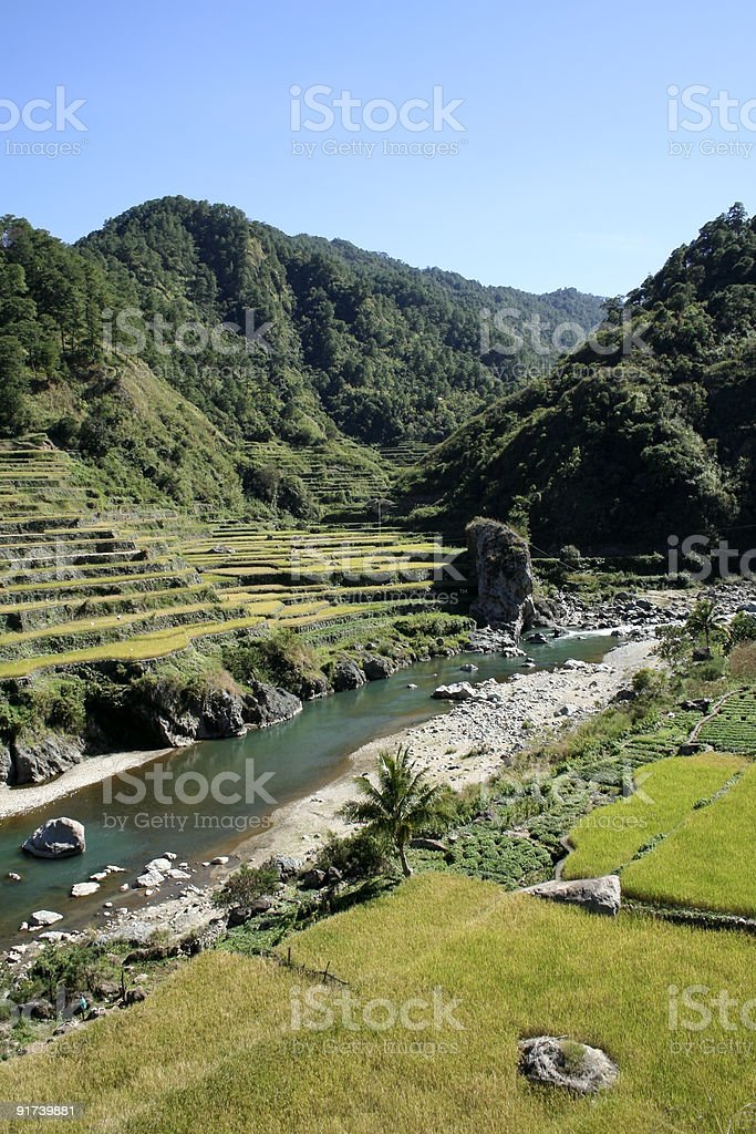 rice terraces of the northern philippines royalty-free stock photo