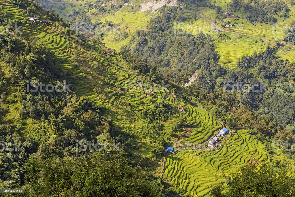 Rice Terraces on the hill slope stock photo