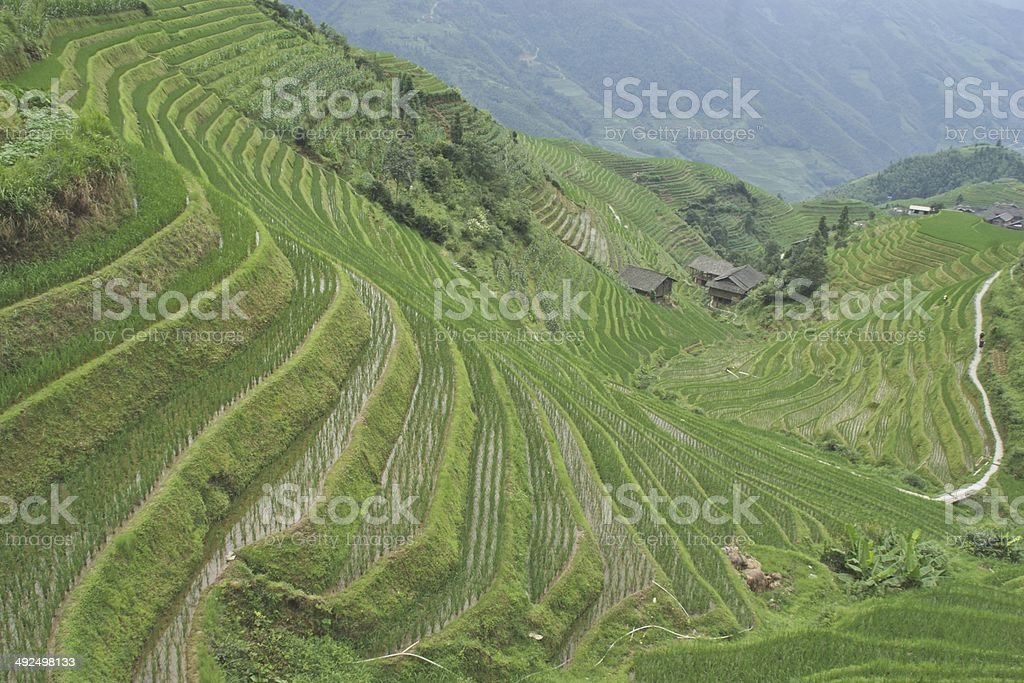 Rice Terraces outside the village of Ping An in China royalty-free stock photo