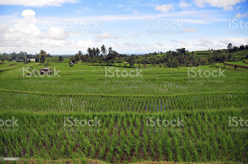 Rice terraces stock photo