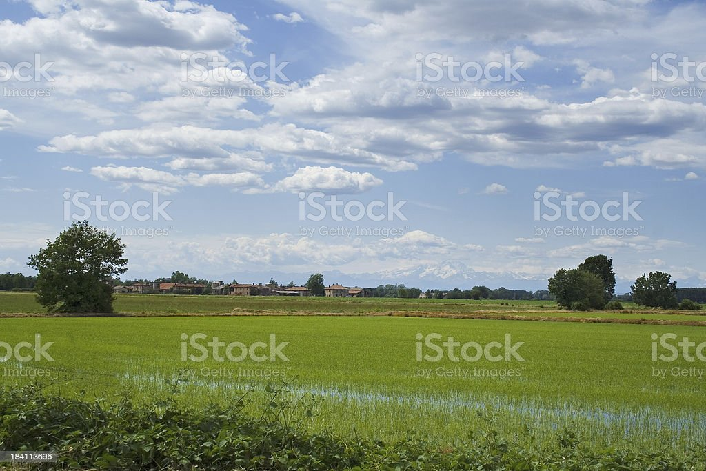 ricefield in north italy stock photo