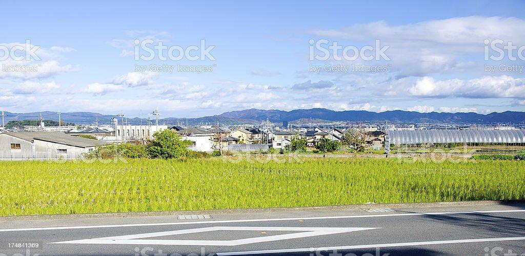 Ricefield Nagaokakyo, Kyoto, Japan. royalty-free stock photo