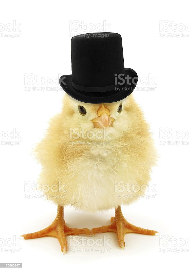Rich chick with top hat stock photo