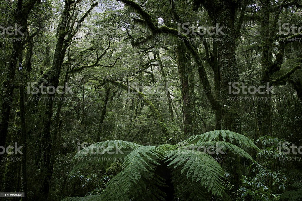 Rich dense forest stock photo