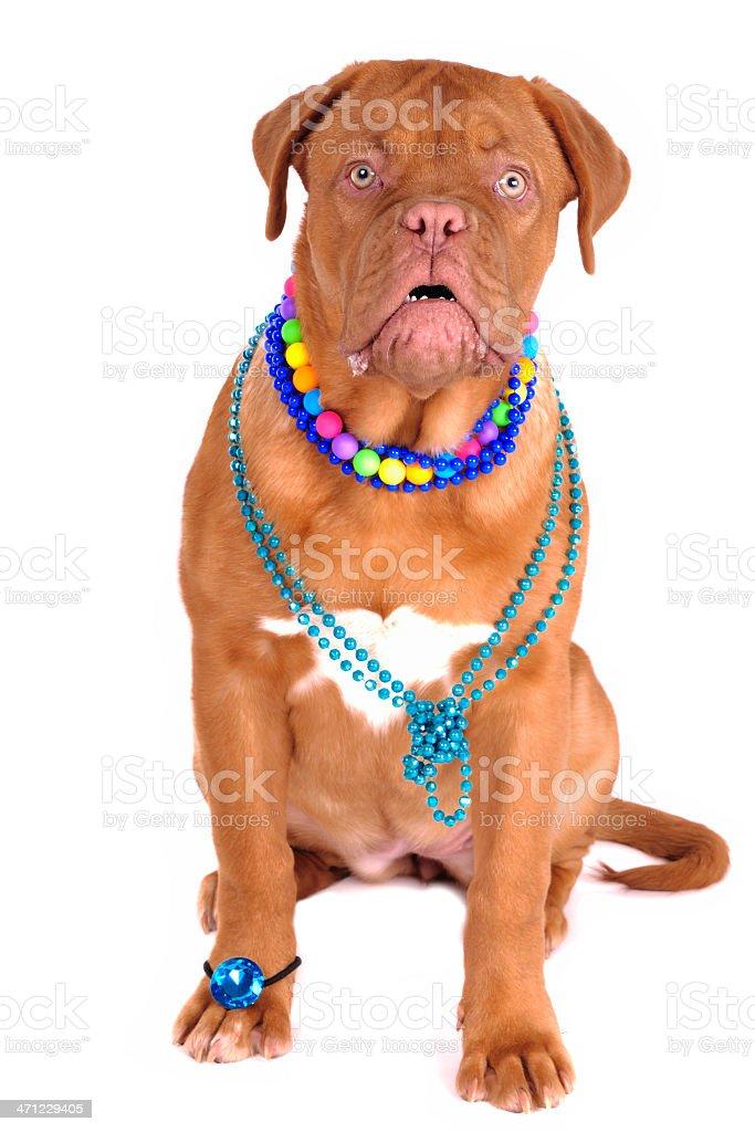 Rich Dog Emotions stock photo