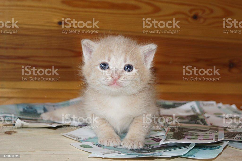 rich kitten stock photo