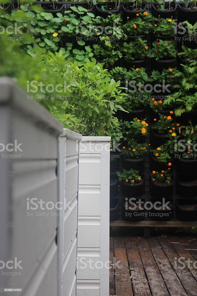 Rich vertical herb garden stock photo