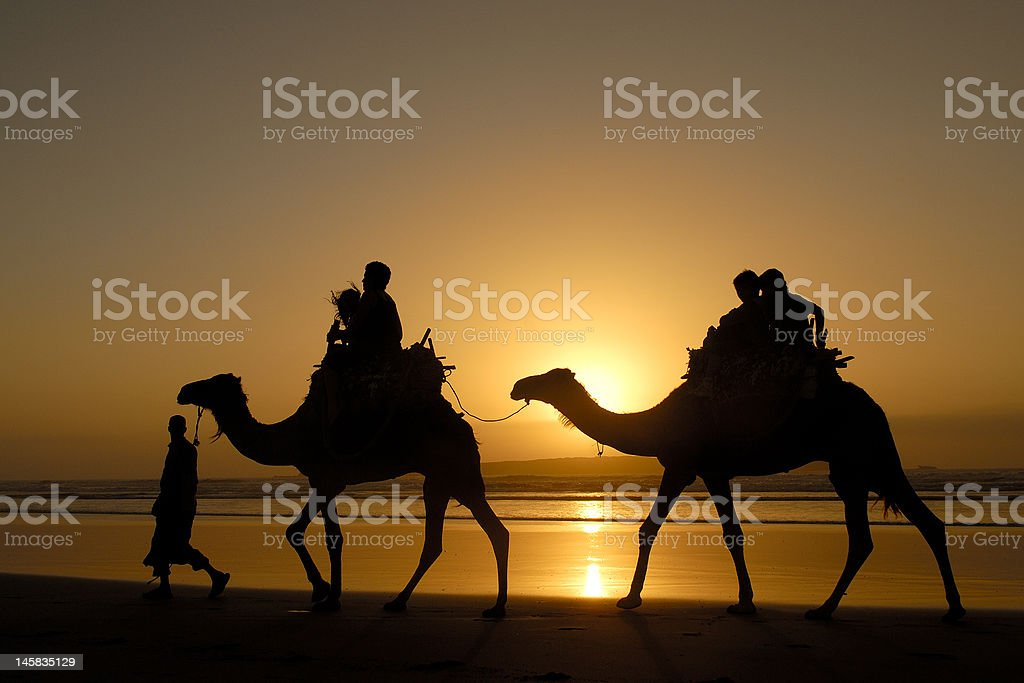 ridding by camel in the beach of essaouira, morocco stock photo