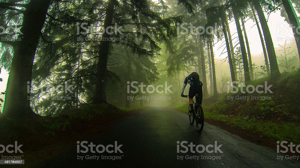 MTB ride in the woods stock photo