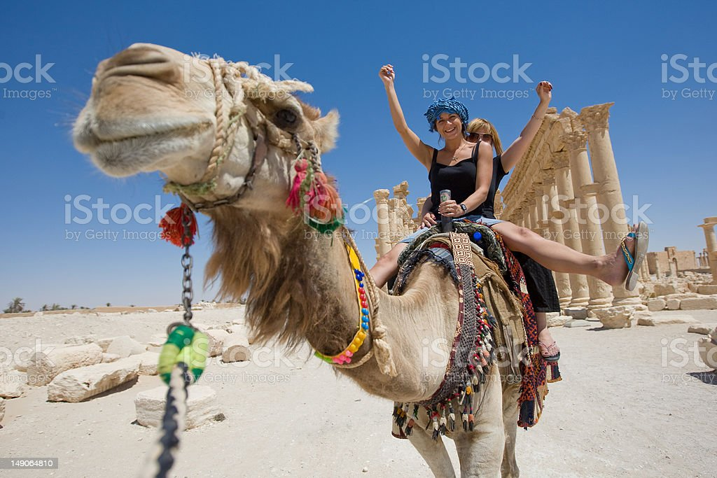 ride on the camel stock photo