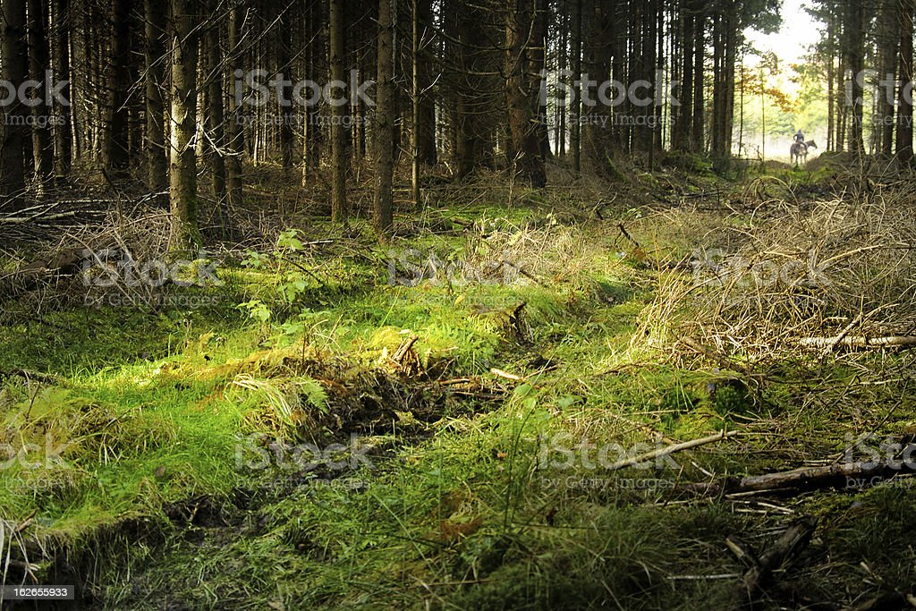 Ride through Farytale Forest royalty-free stock photo