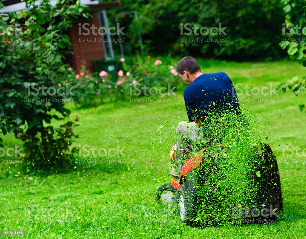 Ride-on lawn mower cutting grass. Focus on grasses in air. stock photo