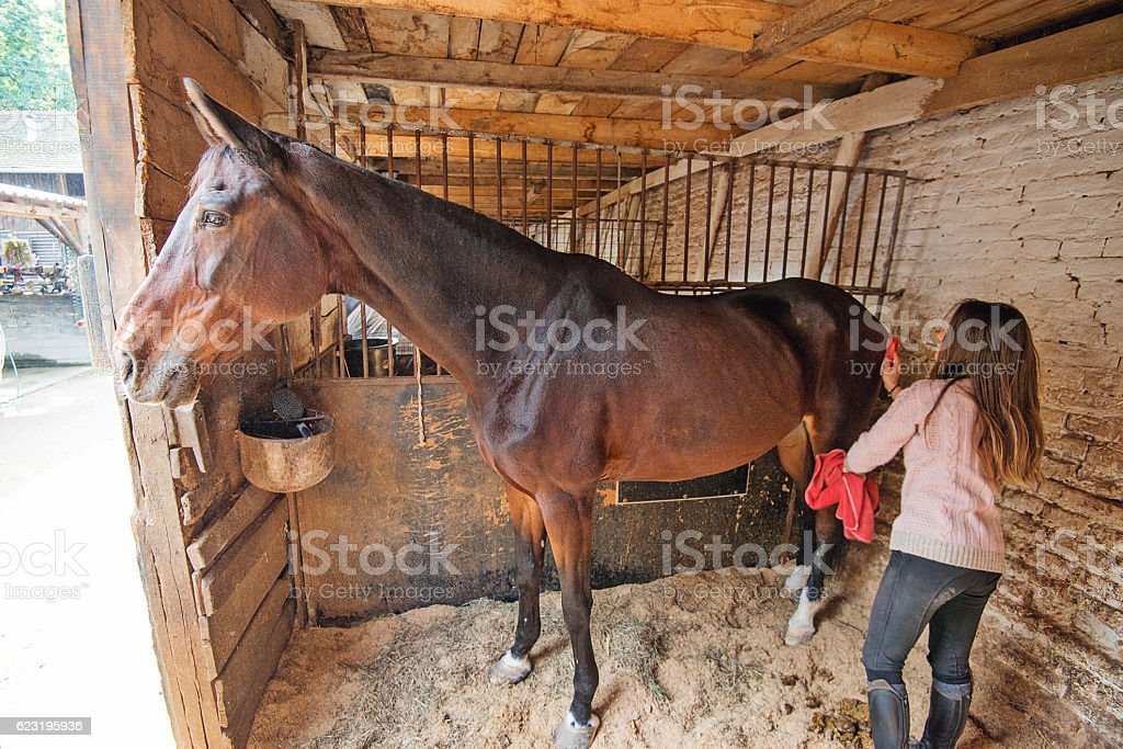 Rider brushing her horse in stable stock photo