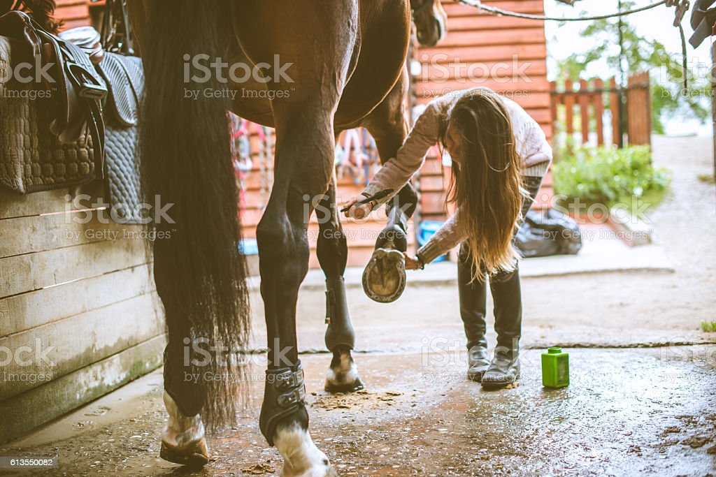 Rider cleaning horseshoes befor the dressage training in stable stock photo
