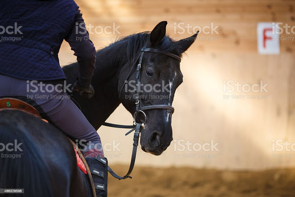 Rider on the horse stock photo