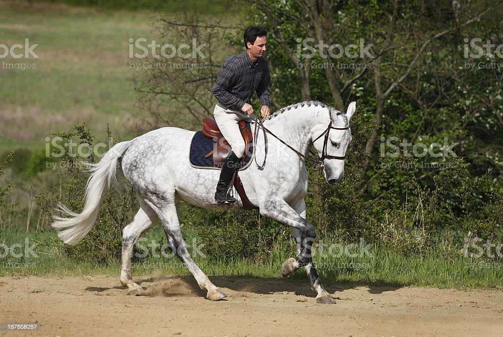 Rider training his horse in gallop stock photo