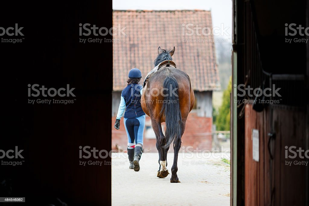 Rider with the horse stock photo
