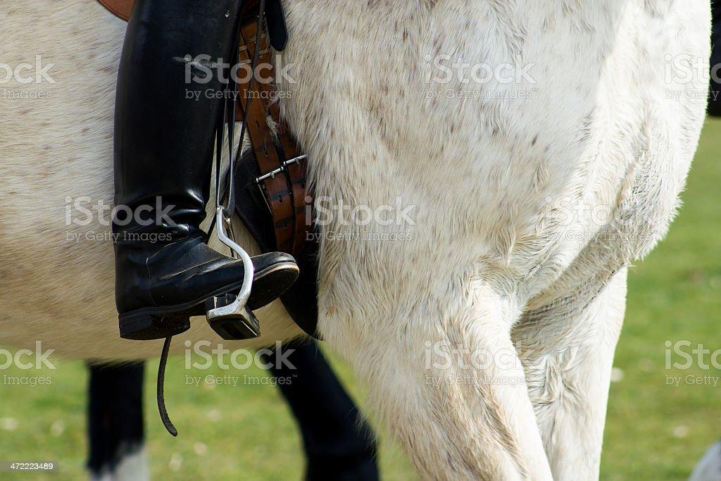 Rideron a horse closeup stock photo