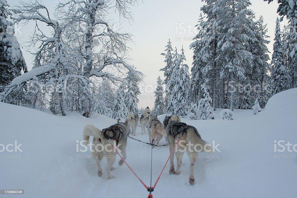 Riding a dogslegde royalty-free stock photo