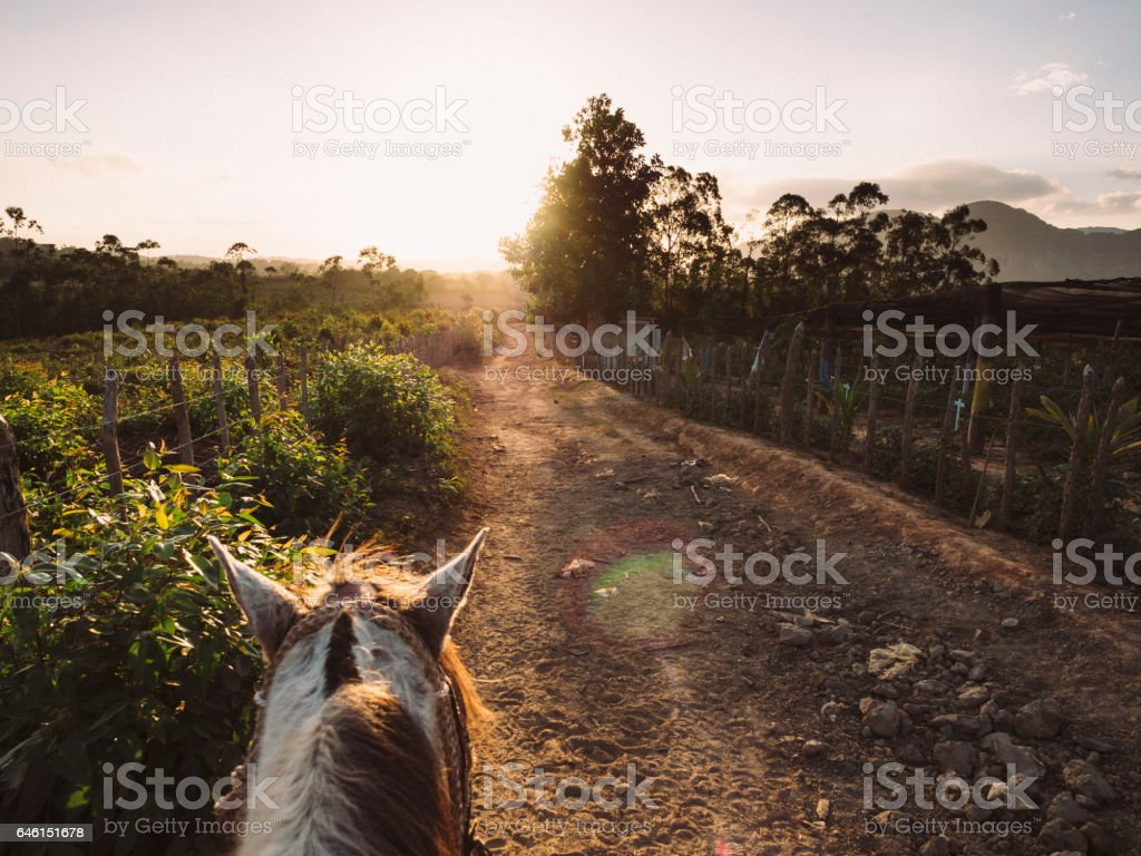 Riding a horse in Vinales Valley, Cuba stock photo