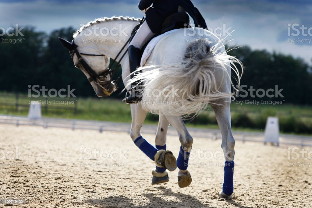 Riding a white horse in a corral  stock photo