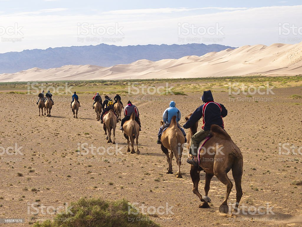 Riding Camels stock photo