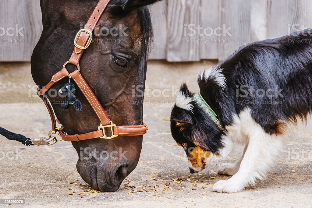 Riding Horse and cute dog together stock photo