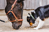 Riding Horse and cute dog together
