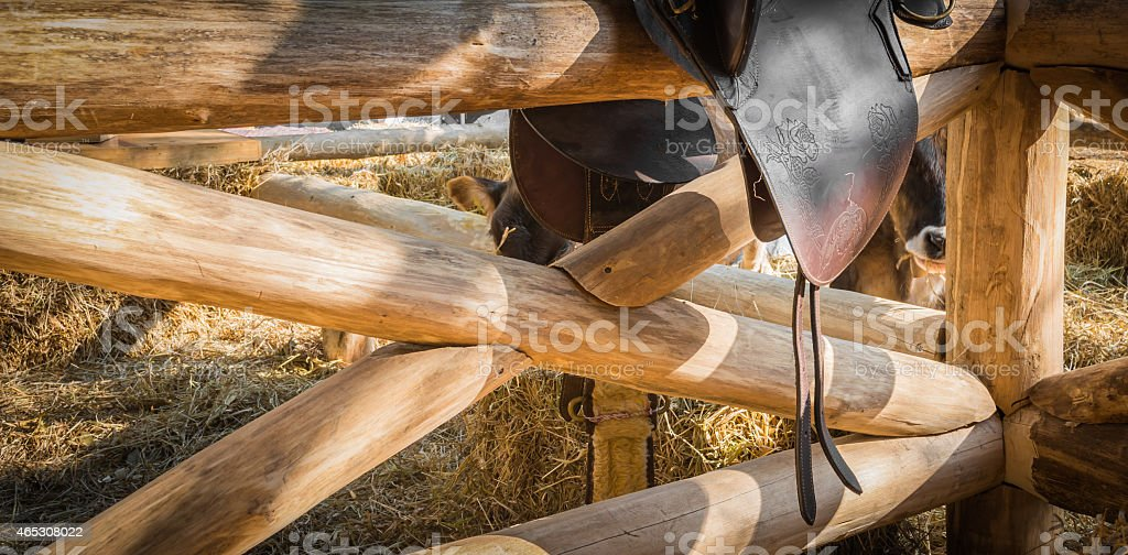 riding horse equipment stock photo