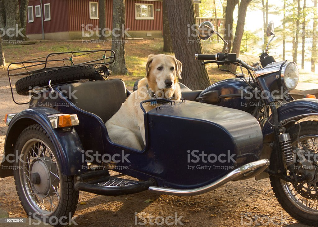 Riding Shotgun stock photo
