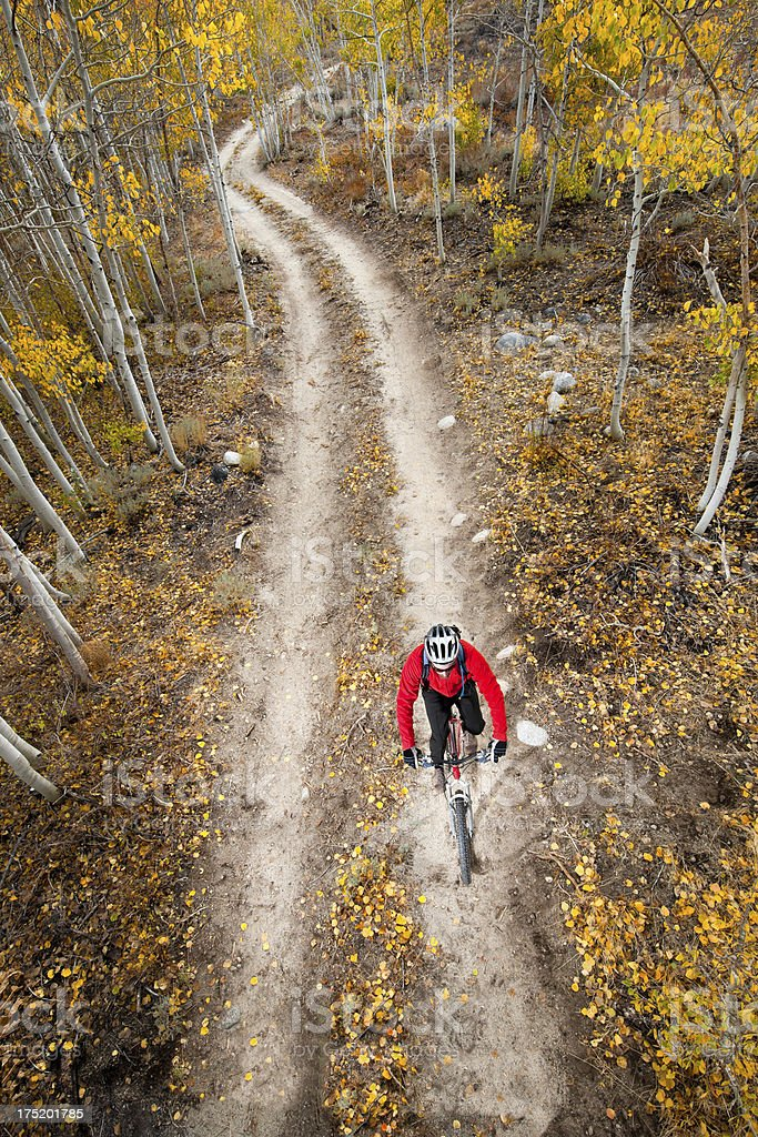 Riding Through Yellow Aspens royalty-free stock photo
