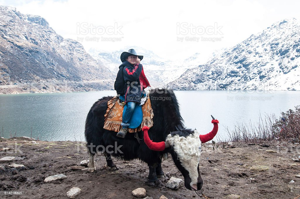 riding yak stock photo