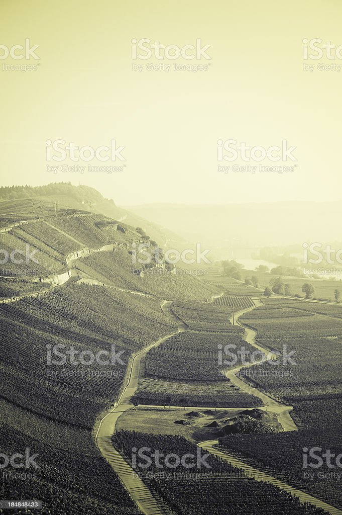 Riesling vineyards near Monzel, Mosel Valley royalty-free stock photo