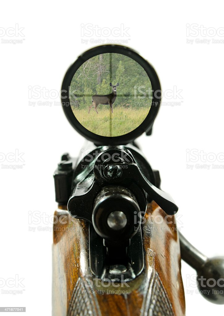Rifle and Scope with Deer stock photo