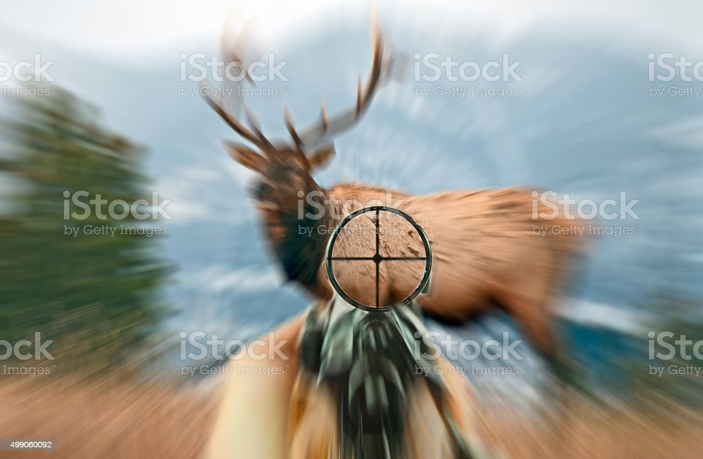 Rifle with scope sight and Bull Elk with zoom applied stock photo