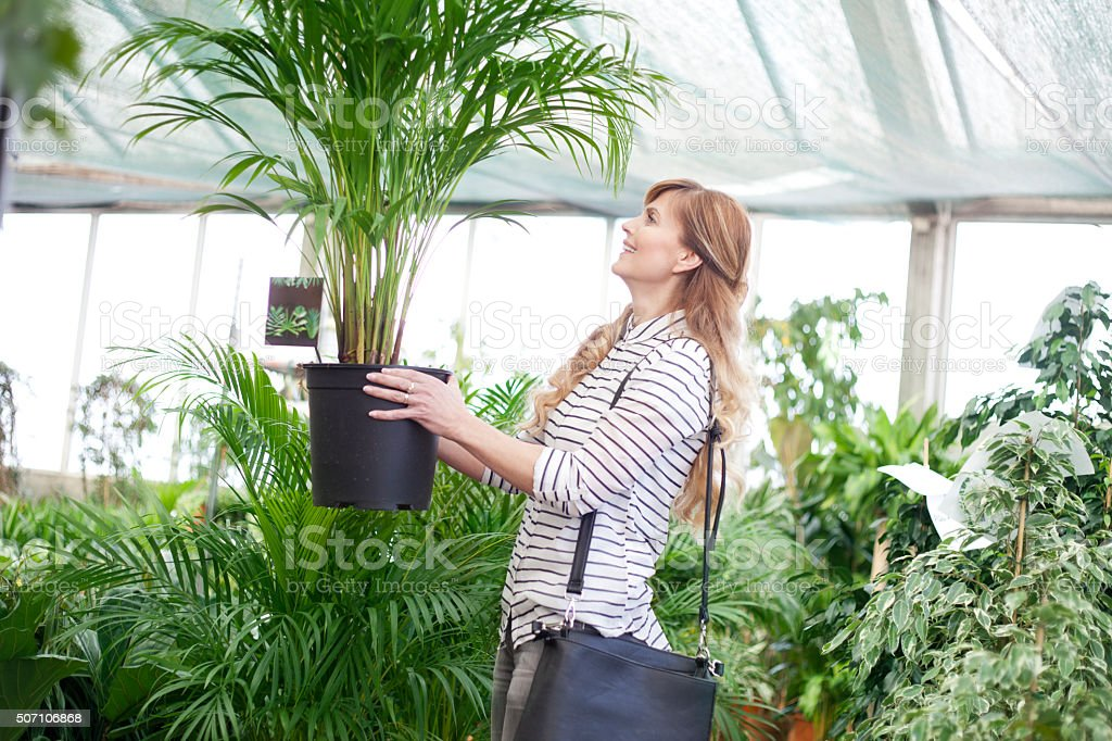 Right plant for me stock photo