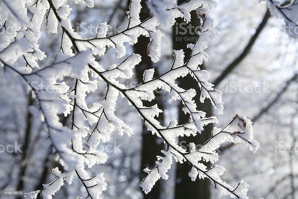 Rime on branches royalty-free stock photo