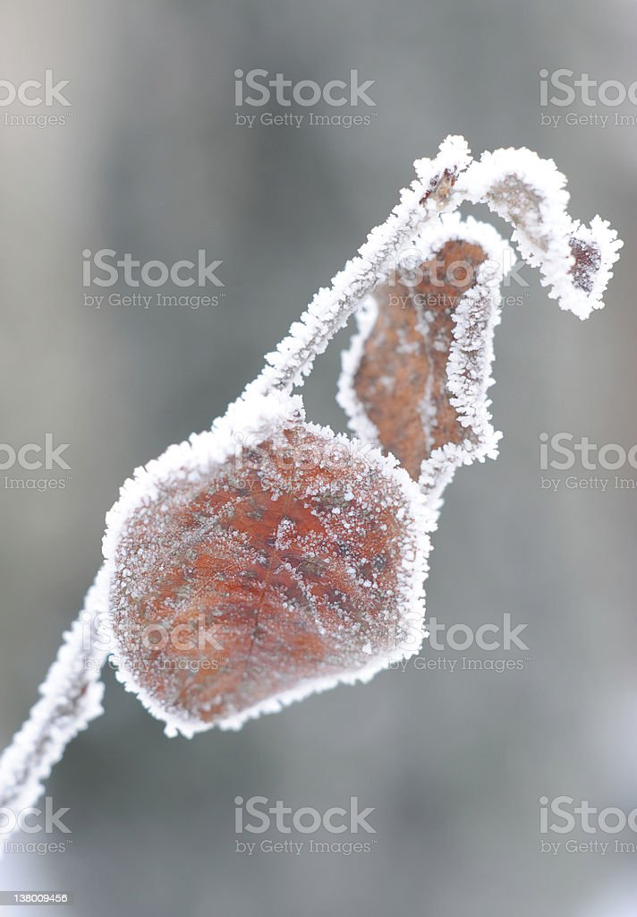 rime on the leaf royalty-free stock photo
