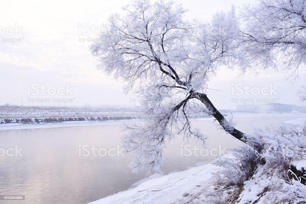 Rime on trees stock photo